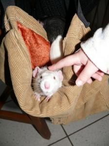Rattusterapie
