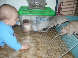Barnabášek, který miluje a vykrmuje potkánky už odmalička