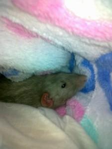 Zůstal několik hodin, zřejmě přehodnocoval celý svůj dosavadní život. Druhý den opět prospal schovaný v domečku v kleci.