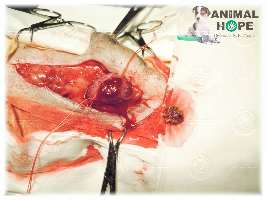Muj Potkan Ma V Moci Krev Czkp