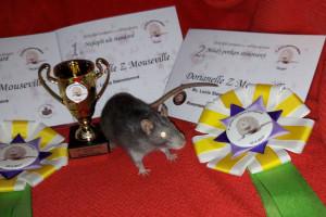 Dorianelle Z Mouseville, Bc. Lucia Stemmerová