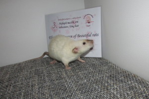 Elizabeth Swann of Beautiful rats, Dagmar Šebková