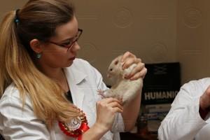 Veterinární přejímka v podání Terezy Novákové