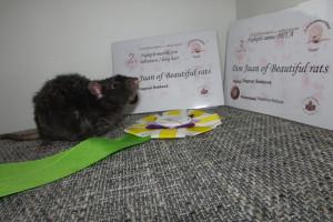Don Juan of Beautiful rats, Dagmar Šebková