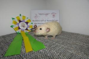 Bezhlavý rytíř of Beautiful rats, Dagmar Šebková