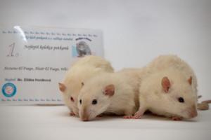 Kolekce potkanů - Eliška Horáková