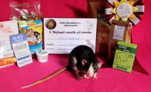 Cinderella Bubble RATS, Veronika Ščibrányová
