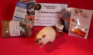 Natalia of Beautiful rats, Veronika Ščibrányová