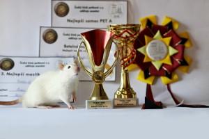 Nachos of Beautiful rats, Eliška Horáková