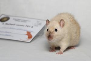James P. Sullivan of Beautiful rats, Daniela Riedlová