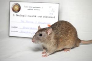 Majk Wazowski of Beautiful rats, Daniela Riedlová