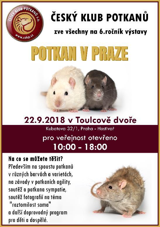 6. Potkan v Praze plakát